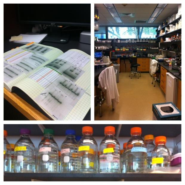 Harvard Med School Research Lab