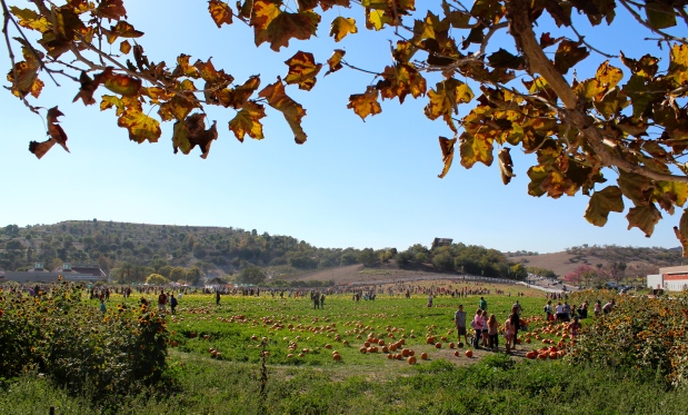 The view before entering the pumpkin patch at Cal Poly Pomona.