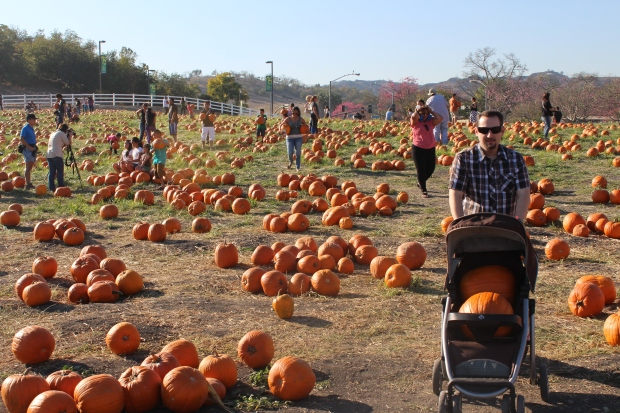 Pumpkin > Baby